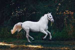 Read more about the article Essential Groundwork Exercises for Horse Training
